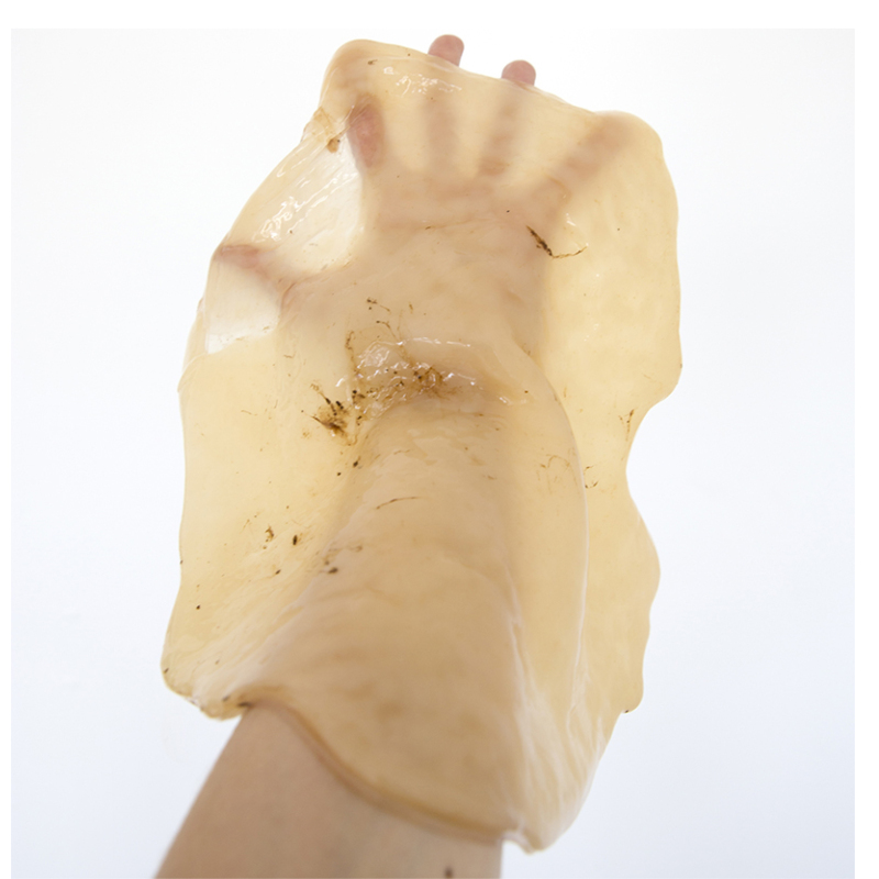 COPYRIGHT_Flora Deborah, hand of the artist with symbiotic culture of yeast and bacteria_cover